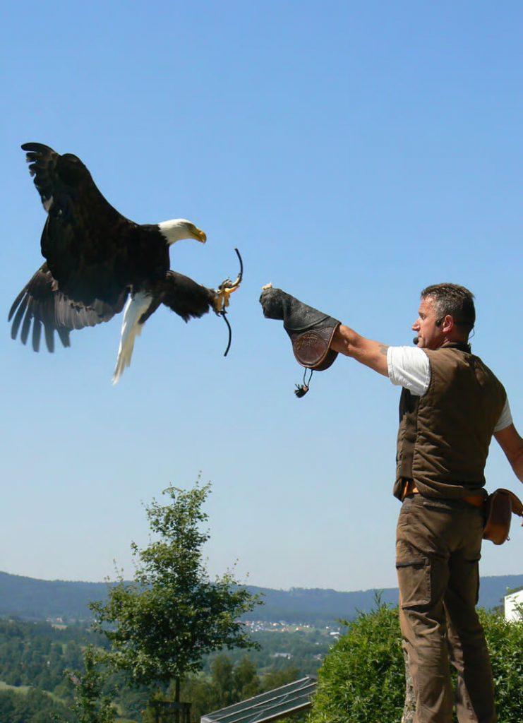 Auge in Auge mit Geier und Falke: Der Greifvogelpark Katharinenberg