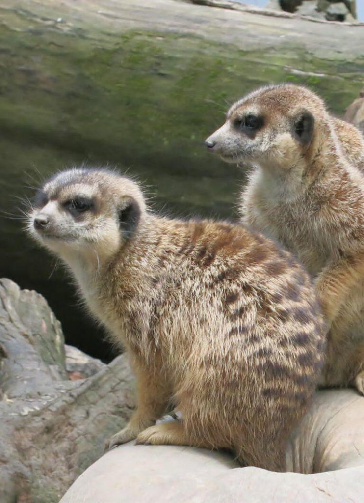 Klein und großartig: Der Zoo in Hof Saale